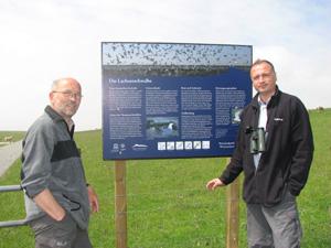 Freud und Leid in der Seeschwalbenkolonie im Vorland des Neufelderkooges
