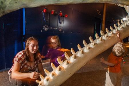 Wale im Multimar Tönning – Abend der offenen Tür