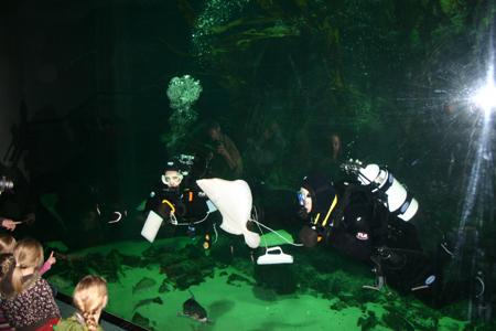 Aquarien des Nationalpark-Zentrums Multimar Wattforum werden für die Saison herausgeputzt