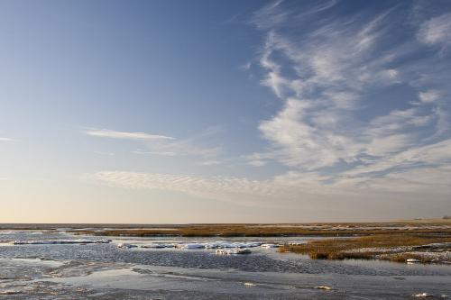 Kalter Frühling im Wattenmeer – Nonnengänse flüchteten, kommen nun langsam aber wieder