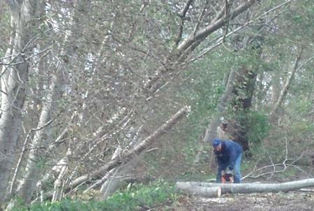 Kreise sprechen Betretungsverbot für alle Wälder aus