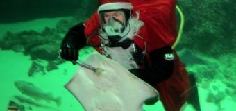 Der Nikolaus kommt am 6. Dezember 2013 ins Multimar Wattforum nach Tönning