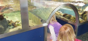 Neue Aquarien im Nationalpark-Zentrum Multimar Wattforum