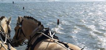 Fotogalerie vom Wattwanderausflug zur Hallig Südfall