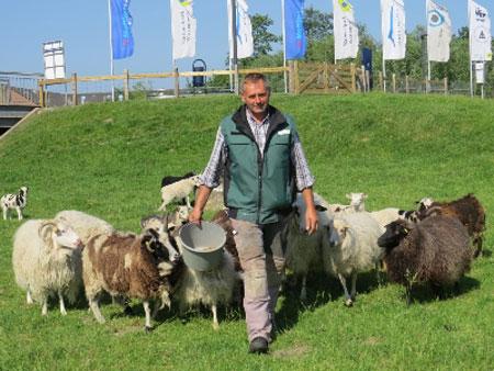 """Multimar Tönning: Schafschur """"wie damals"""" mit zwei Lammköniginnen"""
