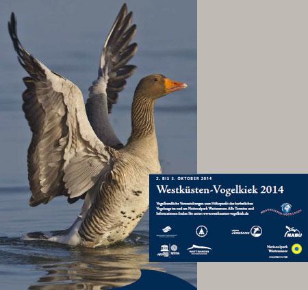 Vogelkiek am Wattenmeer – Ein langes Wochenende rund um den Vogelzug