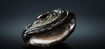 """Foodfestival """"Oyster Trophy Week"""" mit zahlreichen Events zwischen Wattenmeer, Limfjord und Kopenhagen"""