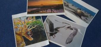"""Die Gewinner beim Fotowettbewerb """"Wattperspektiven II"""" sind ermittelt"""