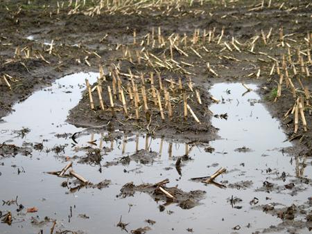 Regen, Regen, Regen – angespannte Hochwassersituation im Binnenland, besonders an der Treene