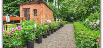 Sommeranfang im Haus Peters – ein buntes Wochenende rund um Schafe und hübsche Rosen