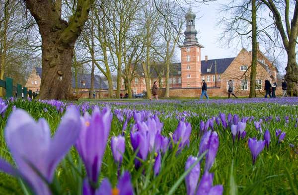 Der März ist da, das Husumer Krokusblütenfest kündigt sich an