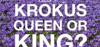 Nun offiziell! Husum sucht Krokuskönigin ODER König
