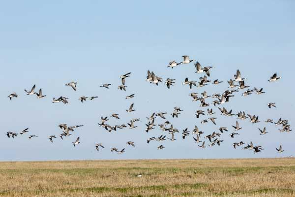 Vögel kieken an der Westküste