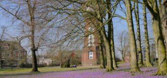 Das Programm: 23. Krokusblütenfest in Husum