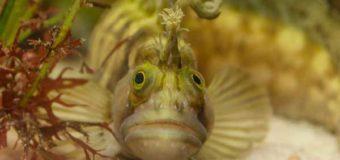 Was Fische wissen: Lesung mit Aquarienführung im Multimar Wattforum