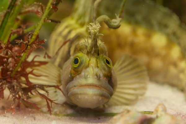 Was Fische wissen: Lesung mit Aquarienführung im Multimar Wattforum - Nordfriesland-Online Blog