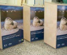Nationalpark Wattenmeer: Was macht eigentlich ein Seehundjäger?